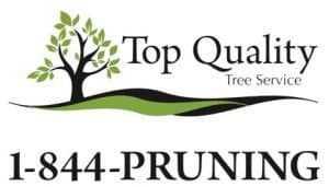 Top Quality Tree